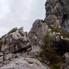 Mitten im Klettergarten