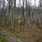 Gabelung in den Waldsektoren